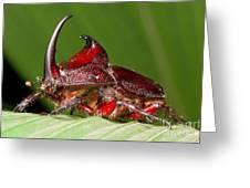 Rhinoceros Beetle Greeting Card