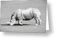 Rhinoceros Charcoal Drawing Greeting Card