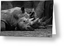 Rhinos Greeting Card