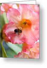 Rhode Bee Greeting Card