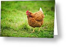 Rhode Island Red Chicken Greeting Card