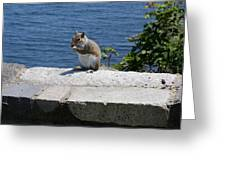Rhode Island Squirrel Greeting Card