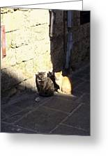 Rhodes Cat Trio Greeting Card