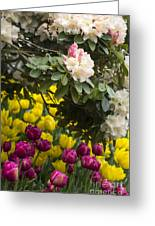 Rhodies And Tulips Greeting Card