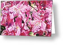Rhodo Blossoms Greeting Card