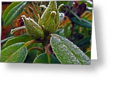 Rhododendron - Frosted Flowerheads Greeting Card