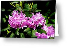 Rhododendron Closeup Greeting Card