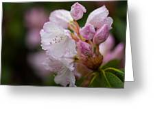 Rhododendron Enborne Greeting Card
