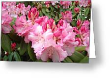 Rhododendron Garden Art Prints Pink Rhodie Flowers Greeting Card
