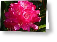 Rhododendron Glow Greeting Card