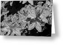 Rhododendron Heaven In Black And White Greeting Card