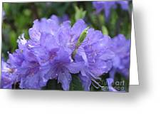 Rhododendron Impeditum Greeting Card