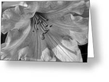 Rhododendron In Black And White Greeting Card
