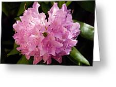 Rhododendron In Pink Greeting Card