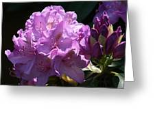 Rhododendron In The Morning Light Greeting Card