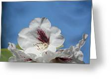 Rhododendron In White And Burgundy Greeting Card