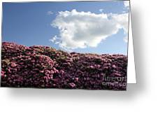 Rhododendron Greeting Card by Melissa Petrey