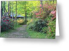 Rhododendron Path In Evening Light Greeting Card