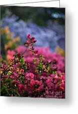 Rhododendron Pink Dream Greeting Card