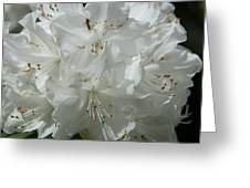 Rhododendron Purity Greeting Card