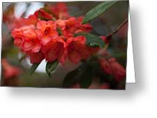 Rhododendron Sonata Greeting Card