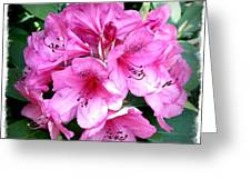 Rhododendron Square With Border Greeting Card