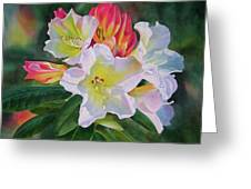 Rhododendron With Red Buds Greeting Card
