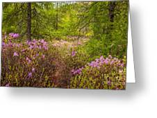 Rhodora Bloom In Acadia Greeting Card
