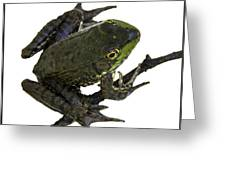 Ribbeting Frog In A Bucket Greeting Card