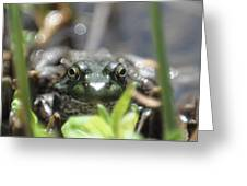 Ribbit Greeting Card
