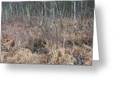 Ribbons On March Color In A Wetland Of Palenville Greeting Card