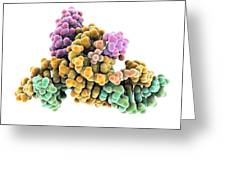 Ribozyme Enzyme And Rna Greeting Card