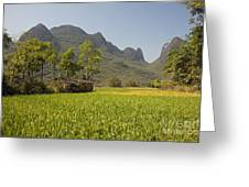 Rice Farm Greeting Card