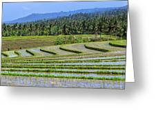 Rice Fields, Bali, Indonesia Greeting Card