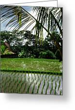 Rice Fields Bali Greeting Card