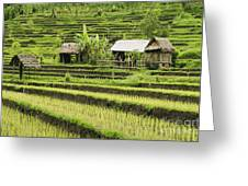 Rice Fields In Bali Indonesia Greeting Card