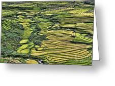 Rice Fields Sapa II Greeting Card