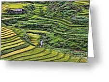 Rice Fields Vietnam Greeting Card