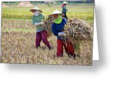Rice Harvest Greeting Card
