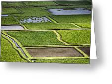 Rice Paddies Greeting Card