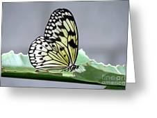 Rice Paper Butterfly On A Leaf Greeting Card