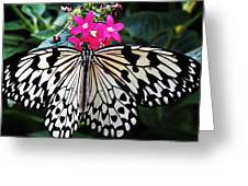 Rice Paper Butterfly On Pink Greeting Card