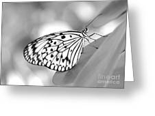 Rice Paper Butterfly Resting For A Second Greeting Card