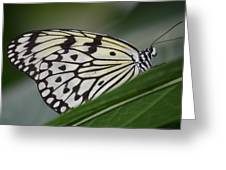 Rice Paper On Leaf Greeting Card