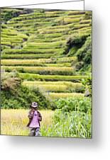 Rice Terraces Greeting Card