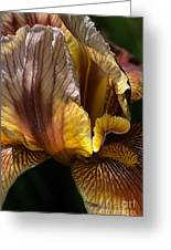 Rich Iris Greeting Card
