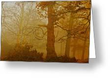 Richmond Park 11 Greeting Card