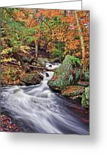 Ricketts Glen Falls Greeting Card