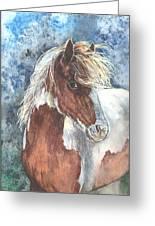 Pinto Pony Greeting Card