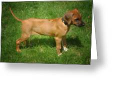 Ridgeback Puppy Greeting Card by Susan  Lipschutz